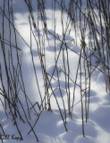 Snow bumps.jpg