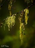 Forest decor.jpg