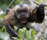 Animals and nature of Peru