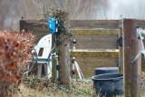 M40, Råhede,  06-03-15, CR6F9844.jpg
