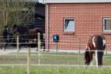 Skjern, 24-04-15, CR6F1417jpg