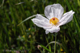 Texas Wildflowers 2015