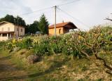 Vrt perunika.jpg
