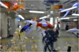Aquarium dans une station de métro