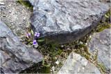Tiens ! des violettes !!!