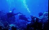 N-Oz Divers.jpg