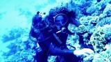 Tamar Under Water.jpg