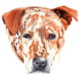 Pete - watercolor, 8 x 10