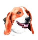 Hank - watercolor, 8 x 10