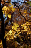 Fall colors, Ponca State Park, Nebraska - Oct. 2014