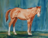 Britches - watercolor     11 x 14    2015