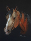 Buckskin Quarter Horse - pastel, 9 x 12        2016