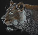 Lioness - pastel, 12 x 12     2016   Photo courtesy Chris Allsebrook