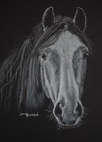 Gray Horse - white charcoal, 9 x 12   Photo courtesy Freddy Juhl