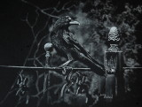 Crow - white charcoal on Strathmore Artagain paper, 9 x 12  Photo courtesy Russ Bridges