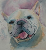 Phoebe - watercolor, 6 x 6         2016
