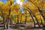 Eastern Sierra - October 2013 (day 2)