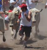 The Great Bull Run - Pleasanton, CA