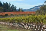 Autumn in Sonoma County