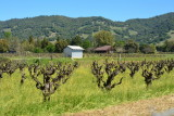 Redwood Valley