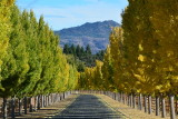 Napa Valley - autumn 2015