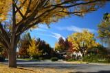 Autumn in Willow Glen - 2015