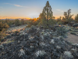 Granite Gilia sunset