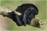 Eikentrilzwam - Exidia truncata