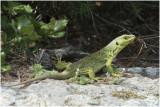Vissen Reptielen en Amfibieën GALLERY