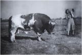 GALLERY Brabant vroeger