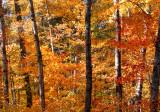 Wall of color copy.jpg
