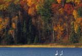 Swans on Mary Lake.jpg
