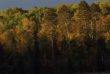 Early morning light on Itasca shoreline copy.jpg