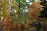 Pine Ridge campground road copy.jpg