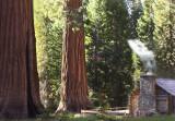 Upper Mariposa Grove II copy.jpg