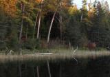 Eagle along fall shoreline copy.jpg