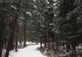 Itasca winter trail copy.jpg