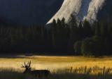 Yosemite NP-Yosemite Wildlife