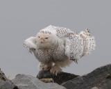 Doves, Owls, Swifts, Hummingbirds