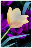 Name of flower.jpg