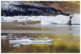 Iceberg Lagoon.jpg
