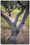 14 Olive grove.jpg