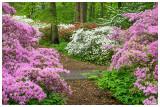 Winterthur Azalia Woods 1.jpg