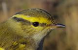 Vogelringstation Van Lennep