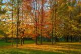 Williston Rd Trees in Early Sun