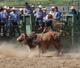 2015-04-16 AFD-Corporation Employees Appreciation Event (Rodeo)