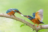 Best of de mes photos d'oiseaux