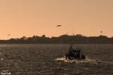Pêcheur en baie de Somme
