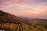 Le vignoble alsacien