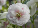 Elaine Coates garden
